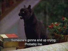 Cat Quotes, Film Quotes, Mood Quotes, Funny Quotes, Funny Memes, Videos Funny, Hilarious, Salem Sabrina, Salem Cat