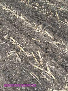 Boots & Heels: seeding rye