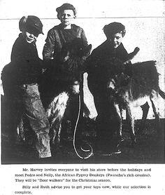 Harveys 1956 xmas donkeys
