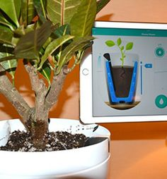 The Parrot Pot is a smart ceramic pot that'll dispense the exact amount of water that your plant needs. That, combined with its 8,000-plant database, means you don't need a green thumb to have a beautiful, thriving house plant in your home.