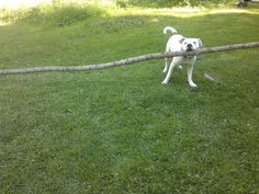 Cujo with a stick.