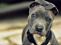 Love the ears, too cute