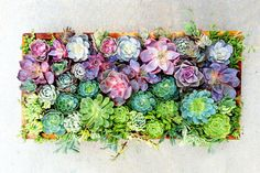succulents and geode rocks for a table display