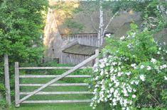 Tasha's Garden - Tasha Tudor and Family
