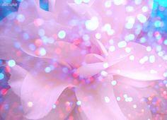 Blossom. ✣