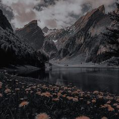 Queen Aesthetic, Nature Aesthetic, Brown Aesthetic, Aesthetic Photo, Aesthetic Pictures, Aesthetic Backgrounds, Aesthetic Wallpapers, Dark City, Throne Of Glass
