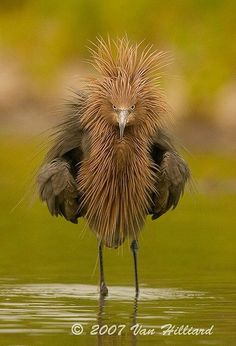 Funny bird! (My hair in the morning sometimes :)