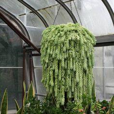 8,121 отметок «Нравится», 137 комментариев — Darryl Cheng           ~  (@houseplantjournal) в Instagram: «Aaah, so busy at work but productivity makes me feel alive - like a thriving plant! For…»
