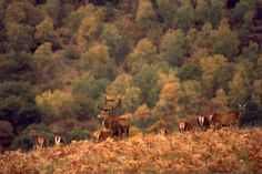 Scotland Country Sports Destination - Hunt Red Stag in the Highlands