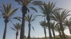 The world of palm trees☀ Instagram: mariaapadillaa
