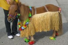 Or this lil' dude living out all your hula dreams. 32 Cute Things To Distract From Your Awkward Thanksgiving Horse Halloween Ideas, Horse Halloween Costumes, Pet Costumes, Halloween Fun, All The Pretty Horses, Beautiful Horses, Horse Stall Decorations, Horse Fancy Dress, Mini Pony
