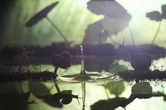 Planet of the snails by Vadim Trunov, via 500px