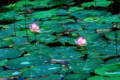 Redefining the Green !, via Flickr.