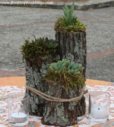 www.Rustic4Weddings.com - Rustic Succulent Plant Holder