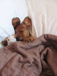today i stay in bed - Google zoeken