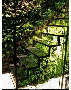 Glass stairs &  green wall