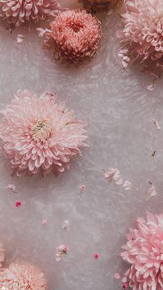 Cute Wallpaper Backgrounds, Tumblr Wallpaper, Pretty Wallpapers, Aesthetic Desktop Wallpaper, Mood Wallpaper, Flower Aesthetic, Aesthetic Collage, Flower Iphone Wallpaper, Cute Patterns Wallpaper