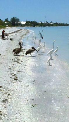 Sanibel Island, Florida  Even the birds love the shells.