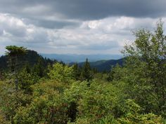 The Blue Ridge Mountains from the Flat Laurel Creek Trail in Pisgah National Forest.