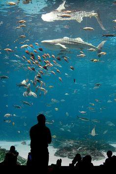 Things to do: Georgia Aquarium #ASAE13