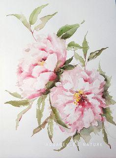 Herbaceous peonies Original watercolour painting