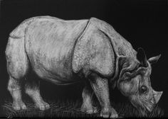 Heather Ward Wildlife Art - Indian Rhino