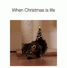 When Christmas Is Life Kittens GIF - WhenChristmasIsLife Kittens ChristmasTrees - Discover & Share GIFs