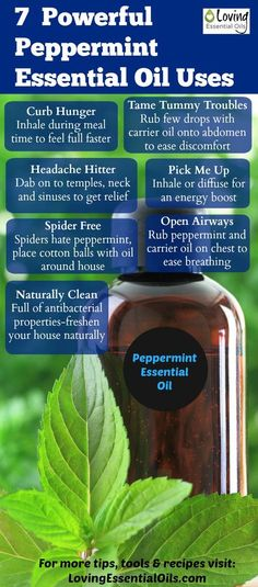 There are many peppermint essential oil uses. Peppermint can be used to invigorate the senses, ease breathing, for stomach problems, and so much more. Peppermint Essential Oil Uses, Doterra Essential Oils, Young Living Essential Oils, Essential Oil Diffuser, Essential Oil Blends, Peppermint Oil Benefits, Yl Oils, Healing Oils, Aromatherapy Oils