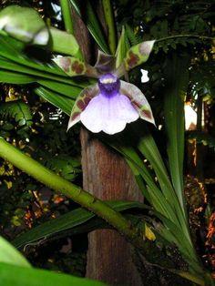 orquideas en Costa Rica