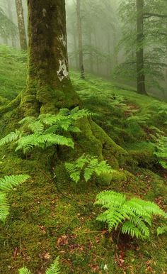 6 Useful Tips For Any Landscape Design – Home Dcorz Forest Garden, Woodland Garden, Fern Forest, Pine Forest, Woodland Wedding, Beautiful World, Beautiful Places, Forest Bathing, Nature Aesthetic