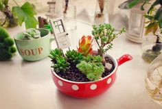 Different mini garden canned plants need different types of care. There are mini garden canned plants that grow well when there is too much heat. Cactus is one Succulents In Containers, Cacti And Succulents, Planting Succulents, Garden Plants, Planting Flowers, Garden Fun, Air Plants, Indoor Plants, Vida Natural