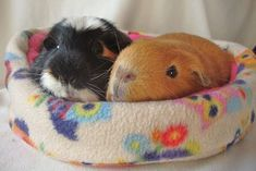 Selling handmade Pet beds and accessories Guinea Pig Accessories, Pig Stuff, Cute Guinea Pigs, Pet Beds, Rabbit, Pets, Handmade, Teacup Pigs, Animaux