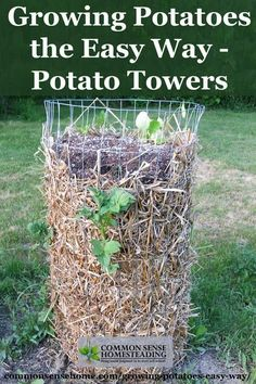 Growing Potatoes in potato towers is a trick that everyone should try in the garden. Save space and make potato harvesting a breeze!