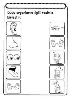 Preschool Printables: Toddler 5 Senses Printable | learn & play ...