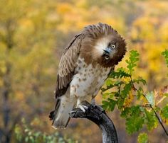 Owl is a very Funny & Cute bird, check out here Funny & Cute Owls new funniest images, pictures & photos. Funny Owls, Funny Cute, Funny Birds, Owl Bird, Pet Birds, Owl Pictures, Funny Pictures, Crazy Pictures, Cute Baby Animals