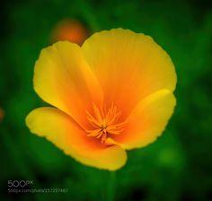 Orange Beauty by RoccoJay. @go4fotos