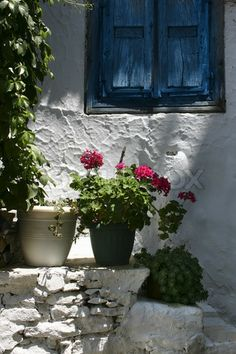 Stock image of 'Blue greek window shutters and red geranium against white plaster stone wall'