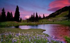 Landscape - splendor, flowers, amazing, reflection, mount rainier, pretty, water, purple, nice, green, trees, paradise, clouds, peaceful, lake, spring, beautiful, river, pink, tree, view, beauty, landscape, sunset, lakeshore, snow, grass, mountains, pink sunset, summer, riverbank, colorful, sky, shore, colors, lovely, nature