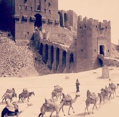 Old picture of the citadel of Aleppo