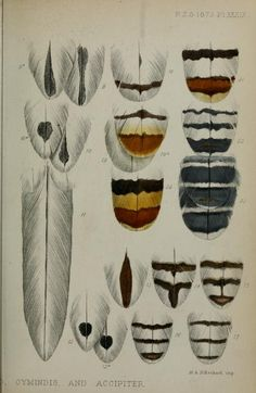 Proceedings of the Zoological Society of London, 1873.
