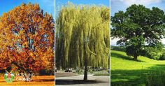 34 Fast Growing Shade Trees That Are Summer Approved