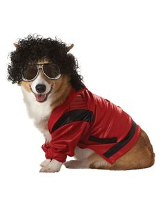 dog coustunes | ... costumes. Look at these funny dog costumes and choose one for your pet