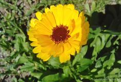 Krem nagietkowy Plants, Diy, Bricolage, Do It Yourself, Plant, Homemade, Diys, Planets, Crafting