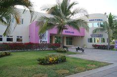 Higher Education in Puerto Vallarta .The Official Puerto Vallarta Travel Guide