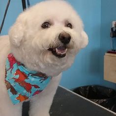 Nikki #wagsmytail #tucsondoggrooming #doggrooming A well groomed dog is a well loved dog! Call us today to schedule your dog grooming appointment 520-744-7040