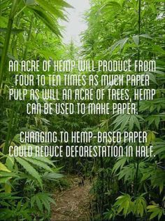 Hemp paper and ecology