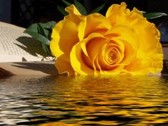 Rose Gif GIFs - Find & Share - Love You Swthrt. Description from…