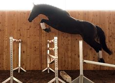 I want to do this with my mare!