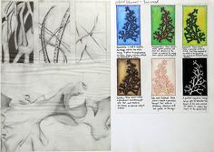 Manisha's International GCSE Art sketchbook layout is clean and uncluttered, without unnecessary decoration. This page contains beautifully simple observational drawings of natural forms (seaweed), as well as an investigation into the mood / colour associations.