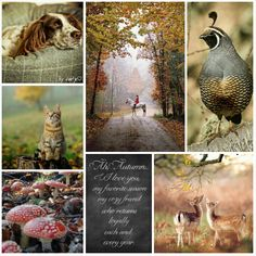 My favorite season #moodboard #mosaic #collage♡